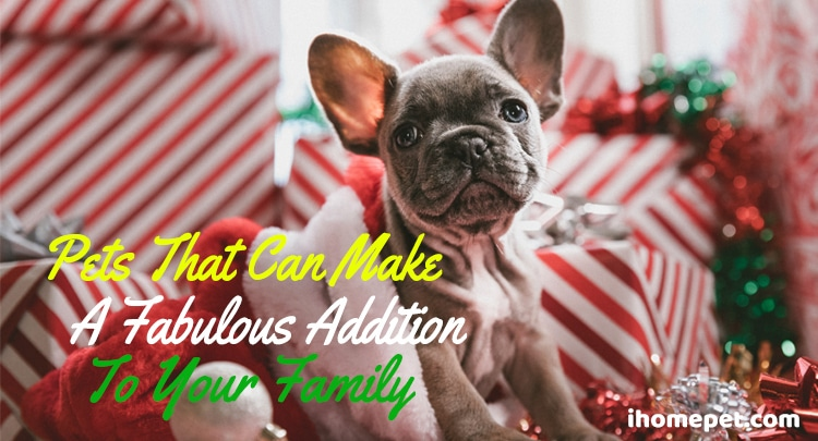 Pets that can make a fabulous addition to your family