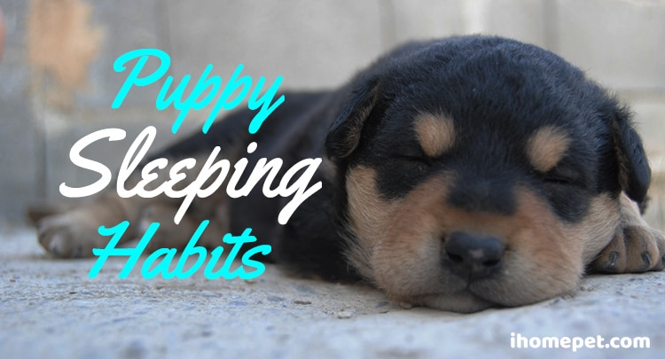 Puppy sleep habits