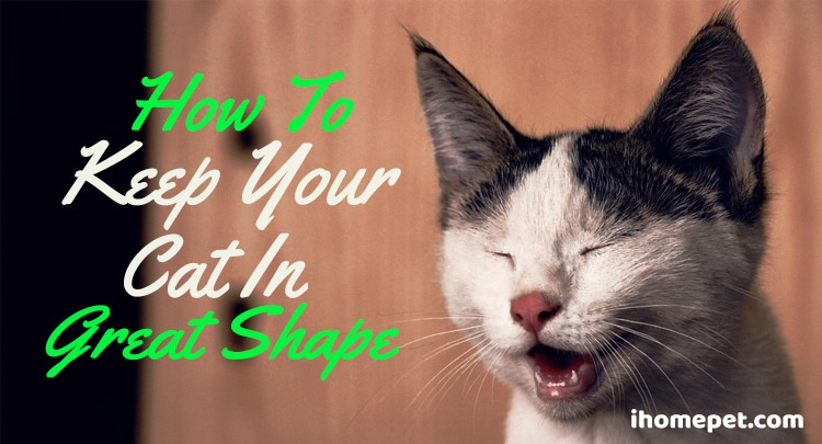 how to keep your cat in great shape