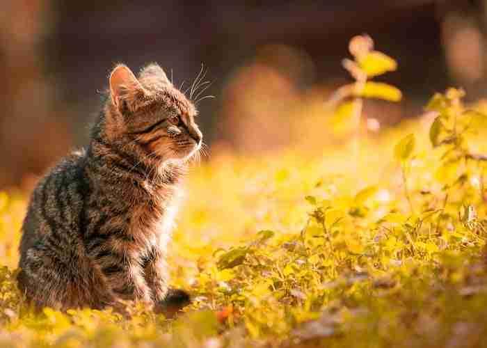 Kitting enjoying the grass