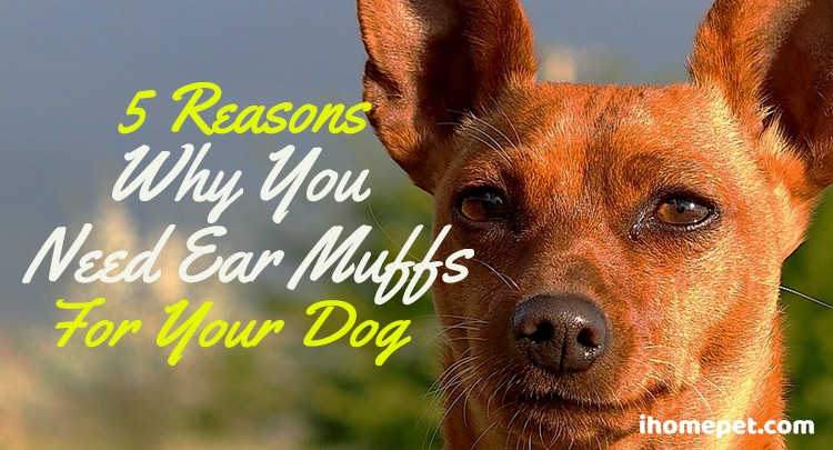 5 Reasons Why You Need Ear Muffs for Your Dog
