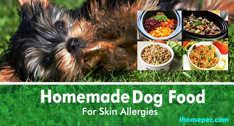 Homemade Dog Food For Skin Allergies