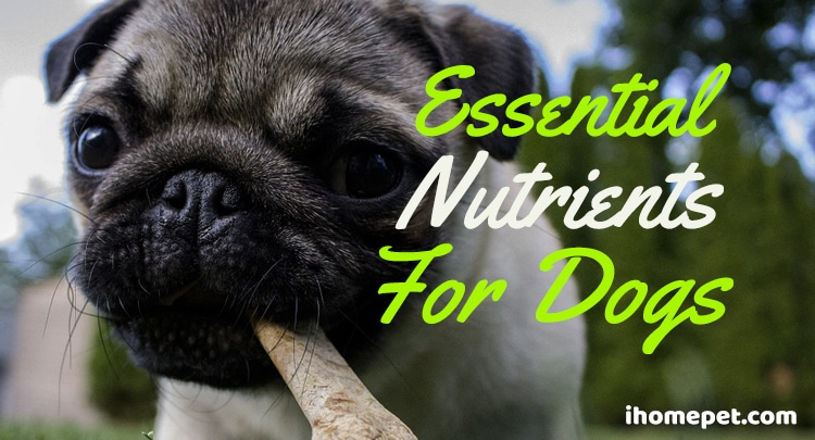 Essential nutrients for dogs
