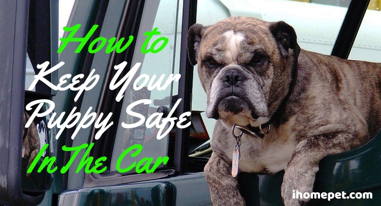 How to keep your puppy safe in the car