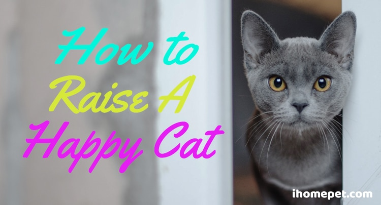How to raise a happy cat