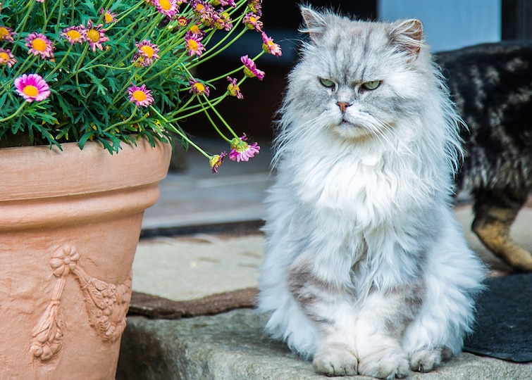 Cuetest little persian cat waiting outside