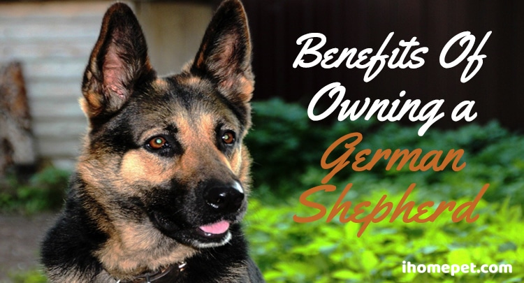 Benefits of owning a german shepherd