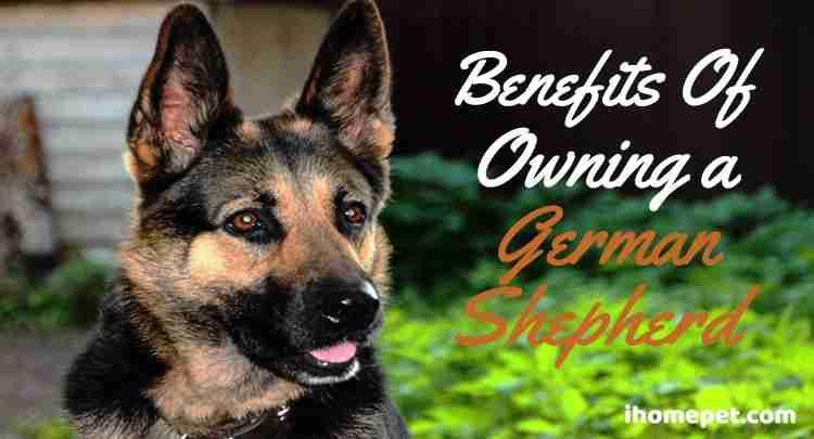 Benefits of owning a german shepherd