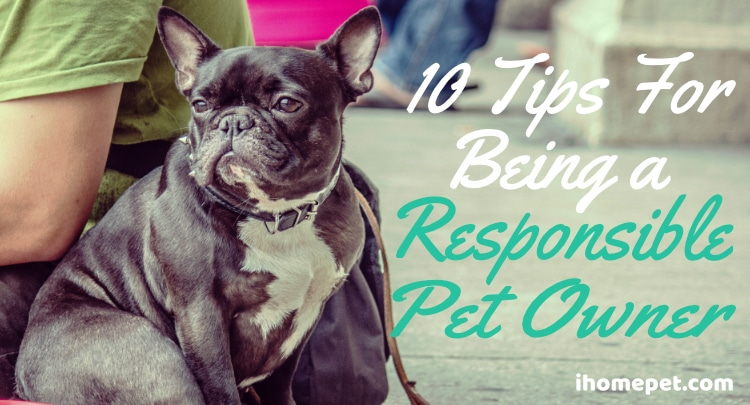 10 Tips for being a reponsible pet owner