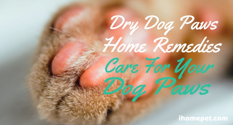 Dry Dog Paws Home Remedy To Care For Your Dog Paws