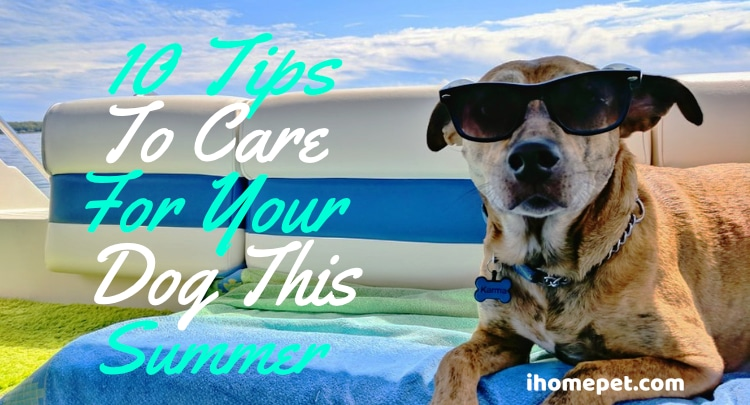 Summer Pet Safety - 10 Tips to Care Your Dog This Summer