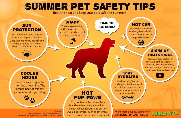 A few summer pet safety tips for your dog