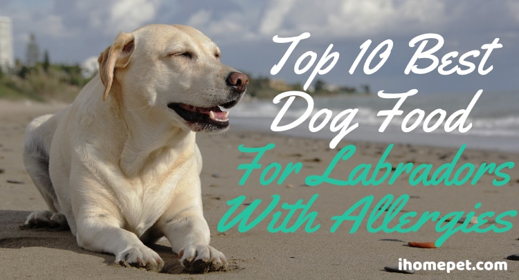 Best Dog Food for Labradors with Allergies