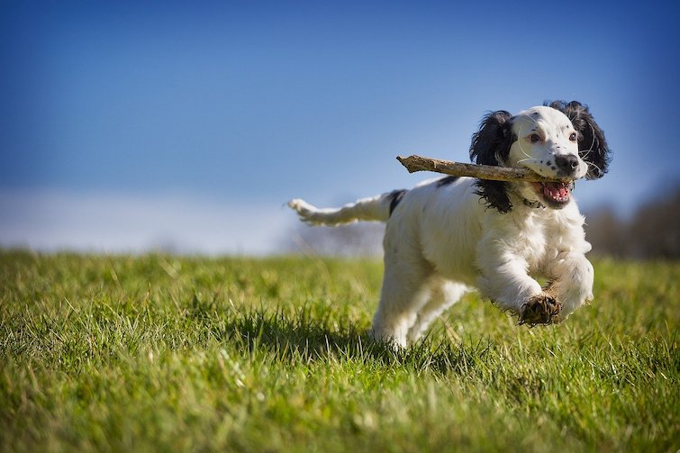 Dog playing fetch outdoor to treat depression