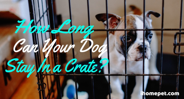 How Long is Too Long For a Dog to be in a Crate