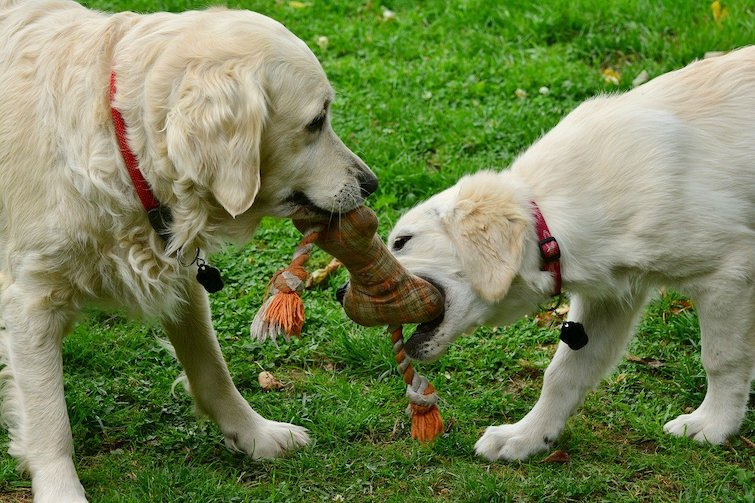 Multi dog family playing at the park can help with dog depression