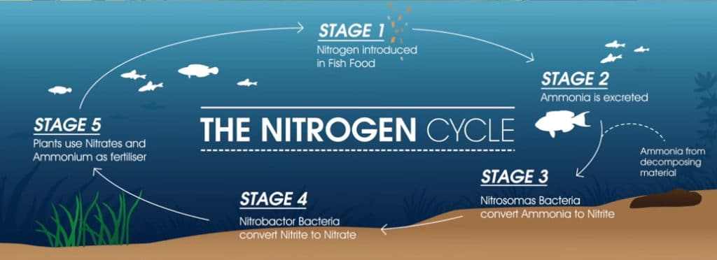 How the Nitrogen Cycle Works