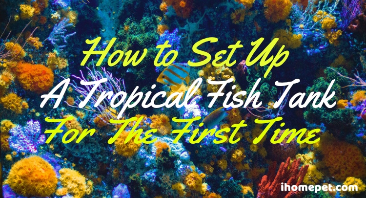 Setting Up a Tropical Fish Tank for the First Time
