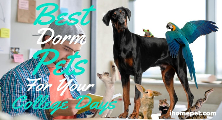Best Dorm Pets