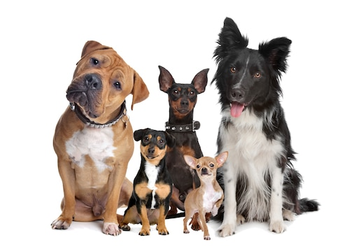 Five different dogs that are very friendly