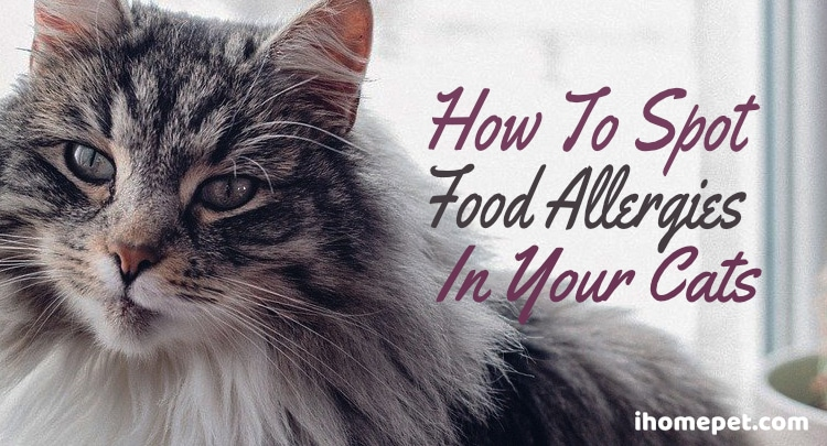 How to Spot a Food Allergy in Your Cat