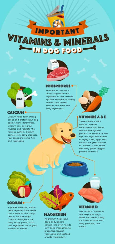 Crucial vitamins and minerals a dog need infograpich