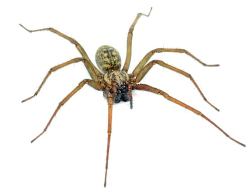 A huge pet spider picture