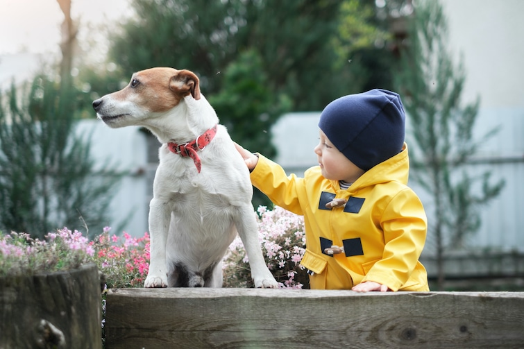 Pictures that resembles how a dog improves a childs everyday life