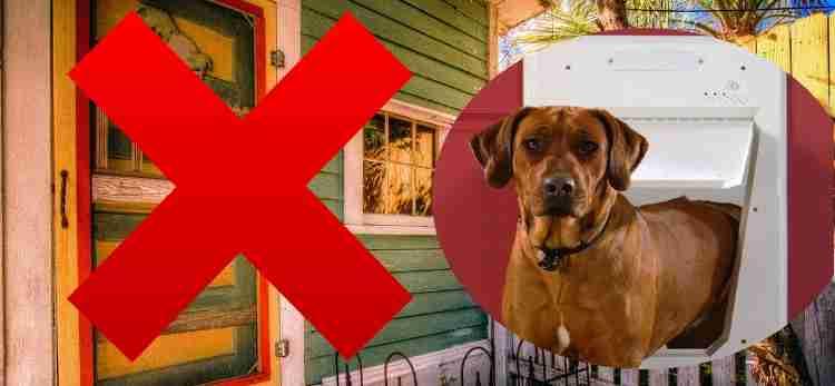 Cons of dog doors