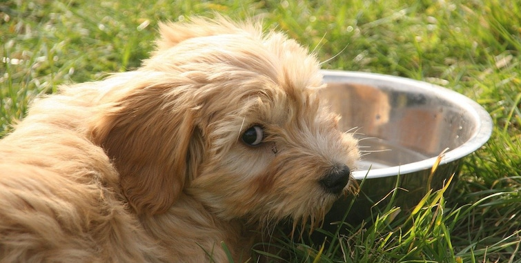 A dog drinking fresh water on a bowl
