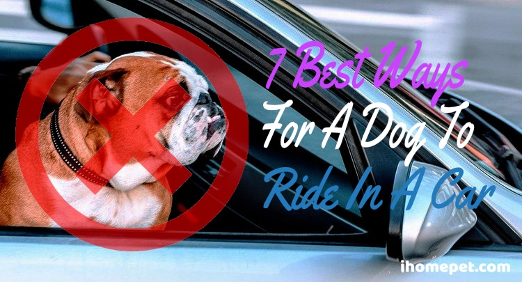 Safest Way For Dog To Ride In A Car