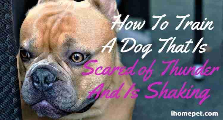 Dog Scared of Thunder Shaking