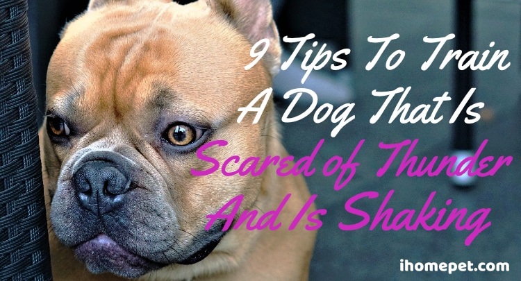 Tips To Train Dog Scared of Thunder and Is Shaking