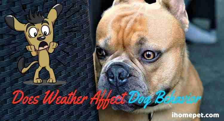 Does Weather Affect Dog Behavior