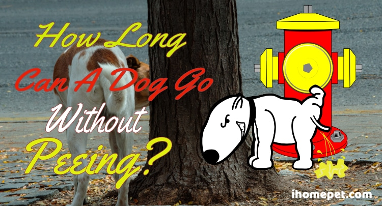 How Long Can a Dog Go Without Peeing